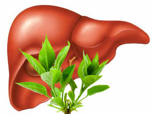 Healthy liver naturally