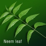 neem benefits in nature cure treatment