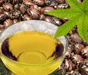 USES OF CASTOR OIL-Benefits of castor oil-plant Ricinus communis